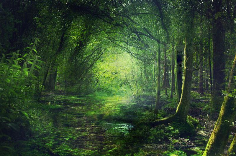 Fairy Forest by Phatpuppyart-Studios