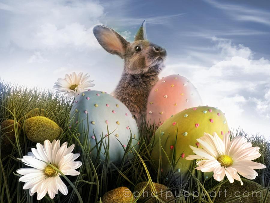 Peter Rabbit Wallpaper by Phatpuppyart-Studios