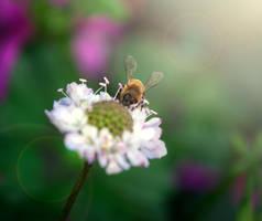 Little Love Bug by Phatpuppyart-Studios