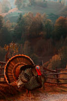 Happy Thanksgiving by Phatpuppyart-Studios