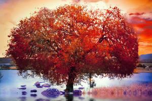 Fire Red Tree Stock by Phatpuppyart-Studios