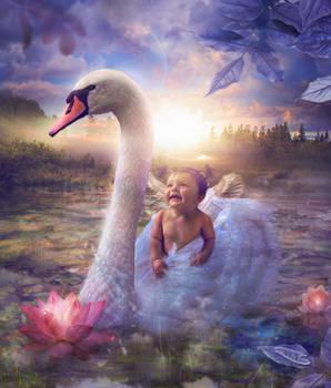 Baby's Swan Lake
