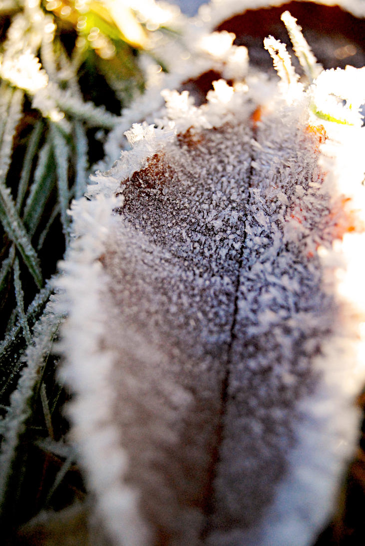Frosty Leaves by Teddy-makes-art