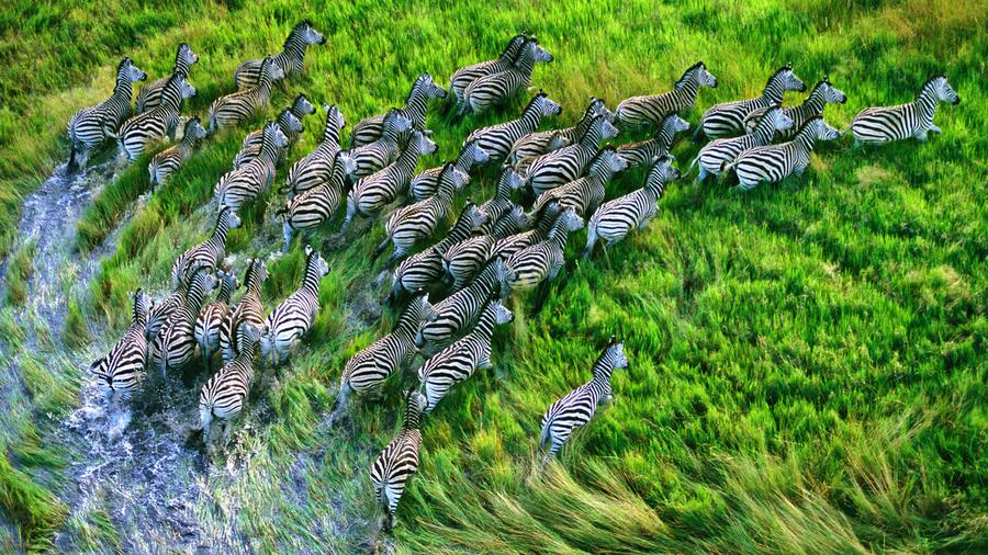 New MacBook Pro Retina Zebras Wallpaper by Martyniv