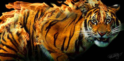 Image result for flaming tiger
