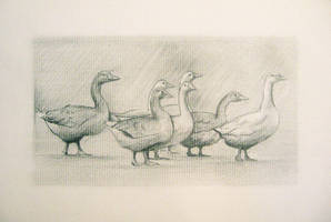 All your geese in a row by tryingfailingtrying