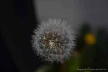 Dandelion by FuzzypandaNekochan