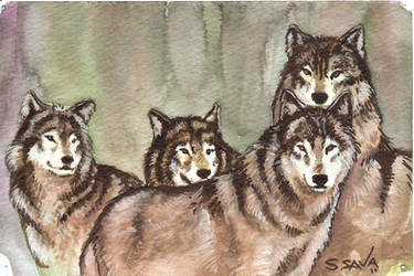 Wolves Watercolor Sketch... by ssava