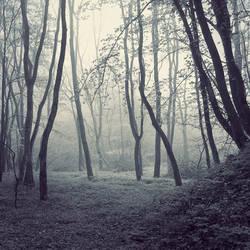 in the wood II by leenik