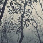 foggy forest by leenik