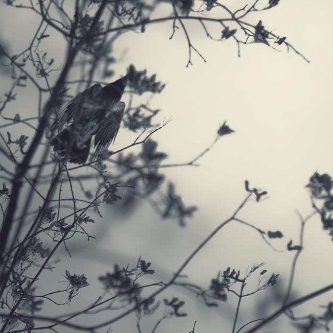 ๑ Skanhell'arts ๑ Closed /!\ Crow_by_leenik