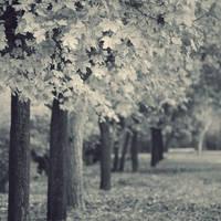 Trees IIII by leenik
