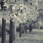 Trees IIII