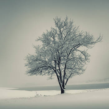 Winter morning by leenik