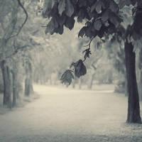 park story by leenik