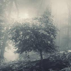 little tree in the fog by leenik