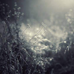 romantic dreams by leenik