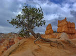 Early Spring in Bryce Canyon