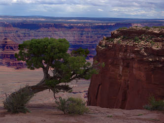 Desert Landscape with Cliff and Tree