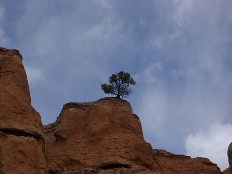 Tree with Rocks and Sky