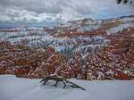 Bryce Canyon Festooned with Spring Snow
