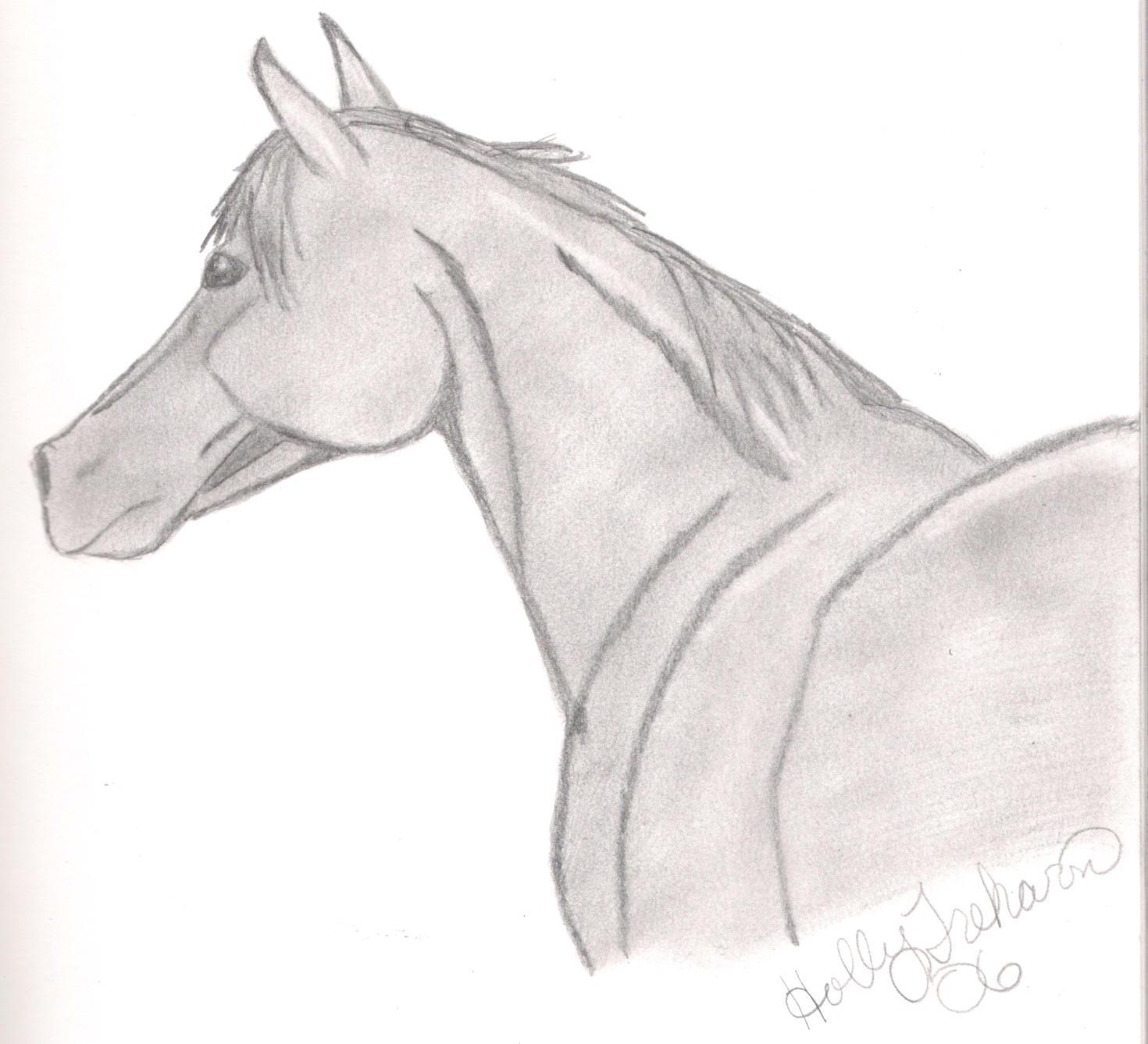 Arabian Horse Head by TeamRoper10789 on DeviantArt