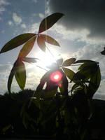 sun by Suadela