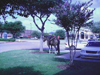 only in texas by LadyMauri