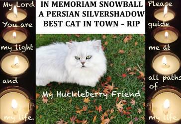 In Memoriam Snowball My Huckleberry Friend Rip