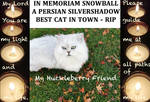 In Memoriam Snowball My Huckleberry Friend Rip by BernardoDisco
