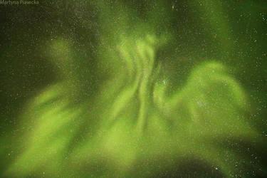 Aurora Phoenix by Piasecka