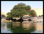 Tree on the lakeside