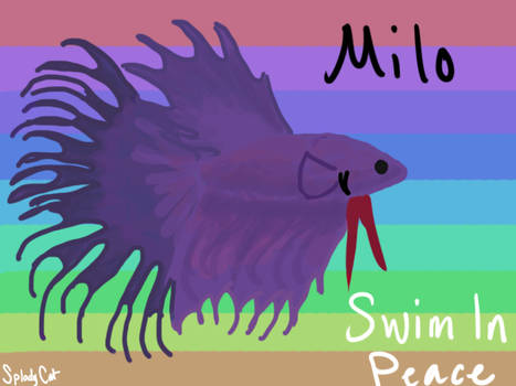 Betta Fish: Milo (SIP)