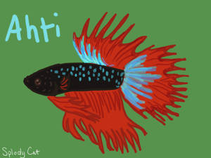 Betta Fish: Ahti