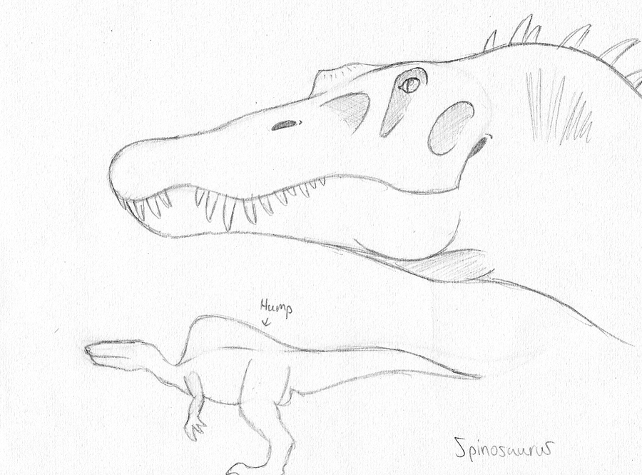 Spinosaurus sketch by guilmon182