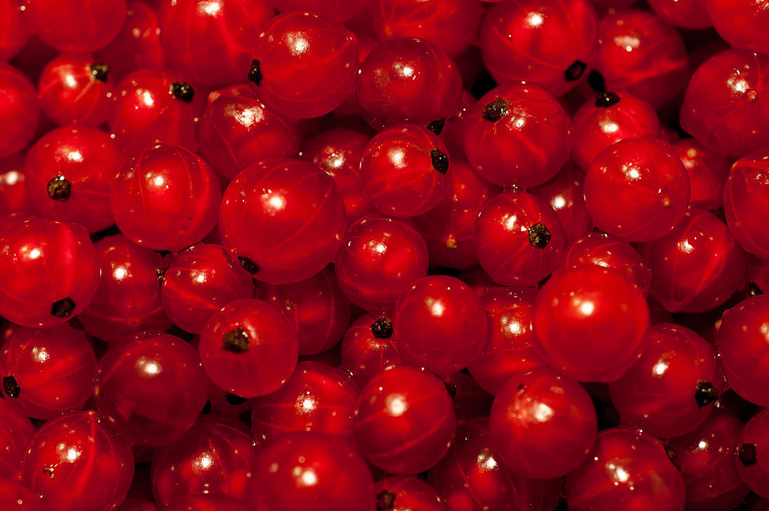 Red Berry 389175764 on You Are What Eat