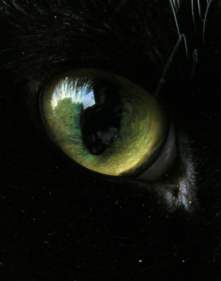 evil_psycho_cat_by_evil_psycho_cat-d37b6ha.jpg