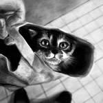 Day58 Cat in Bag