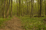 Forrest path 01