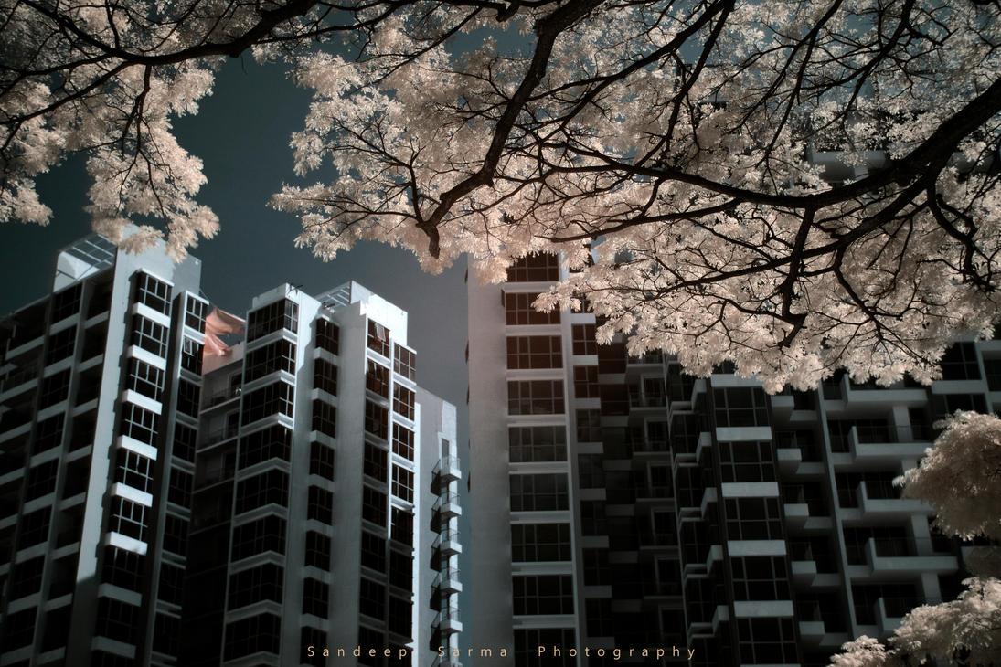 iridescent by sandeepsarma