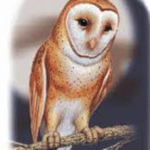 EglantineAlba's Profile Picture
