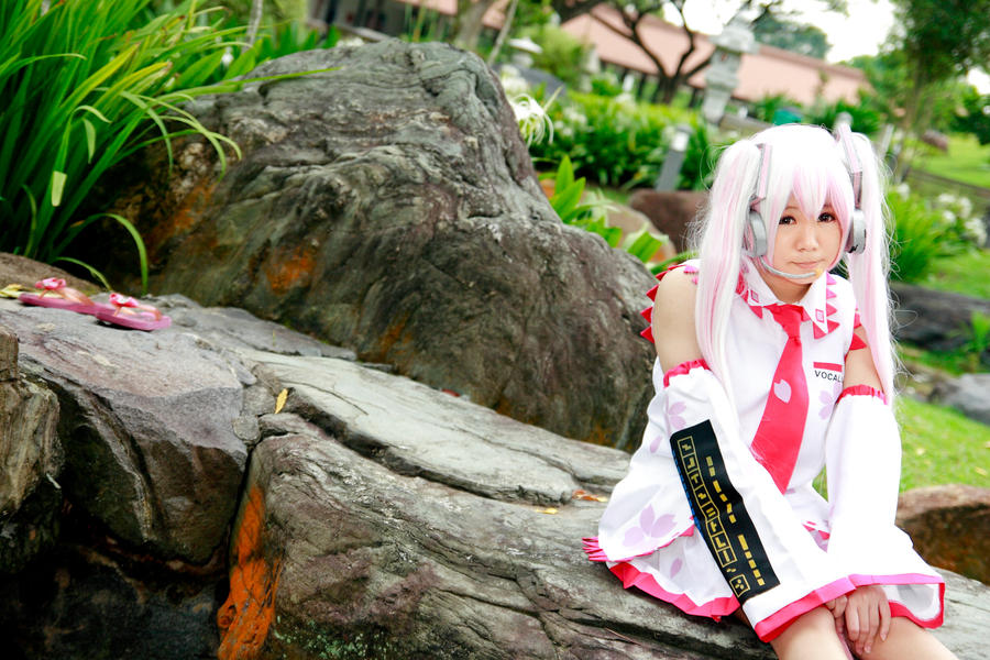 Vocaloid - Sakura Miku by Xeno-Photography