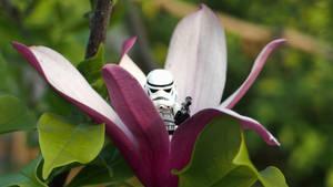 LEGO Stormtrooper hiding around