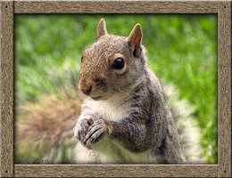 Squirrel: A Portrait by Dracoart