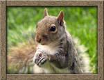 Squirrel: A Portrait