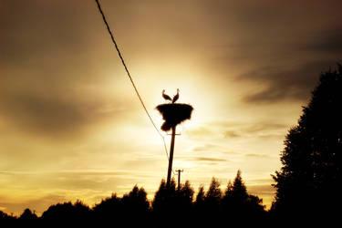 Storks In Sunset
