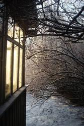 December Sunlight