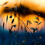 s u m m e r by SaphoPhotographics