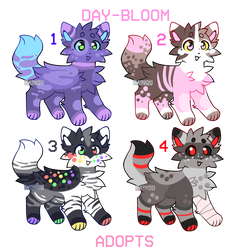   cat adopts   4/4 open   auction   by day-bloom