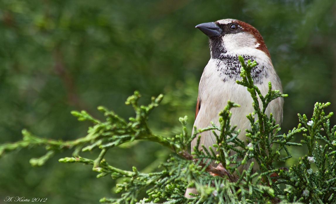 Evergreen Outlook by BirdinByNoon